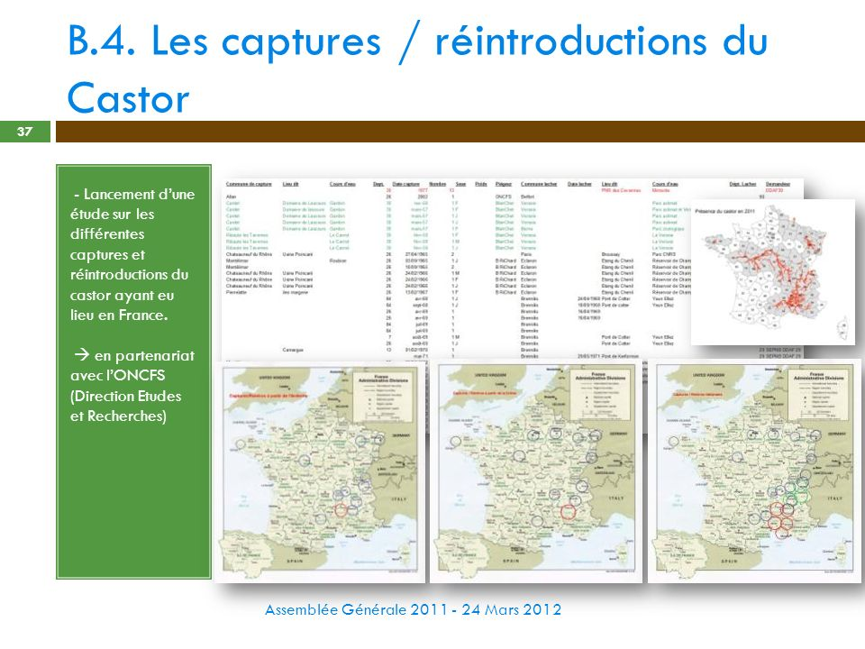 B.4. Les captures / réintroductions du Castor