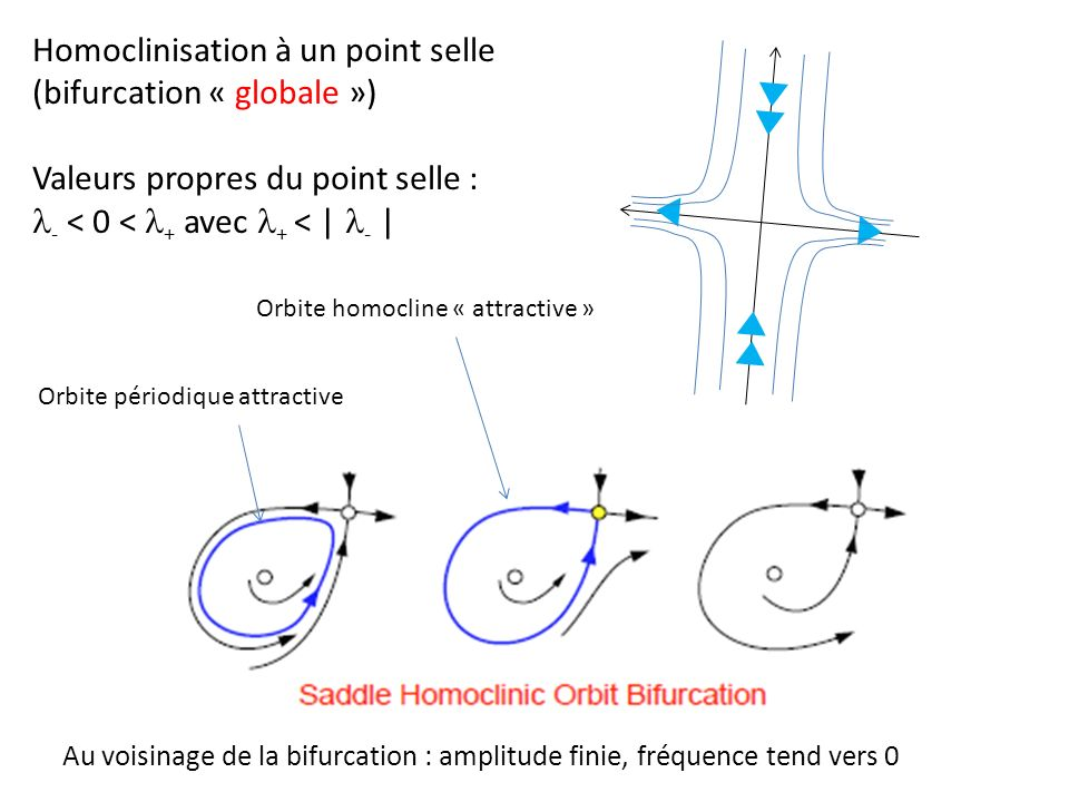 Homoclinisation à un point selle (bifurcation « globale »)