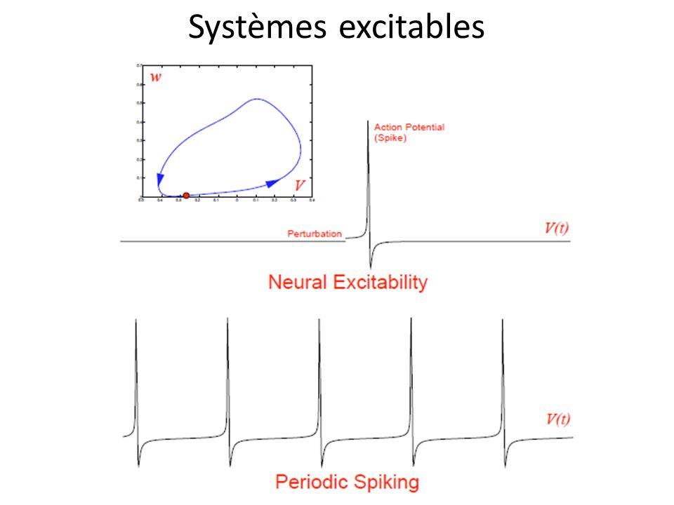 Systèmes excitables