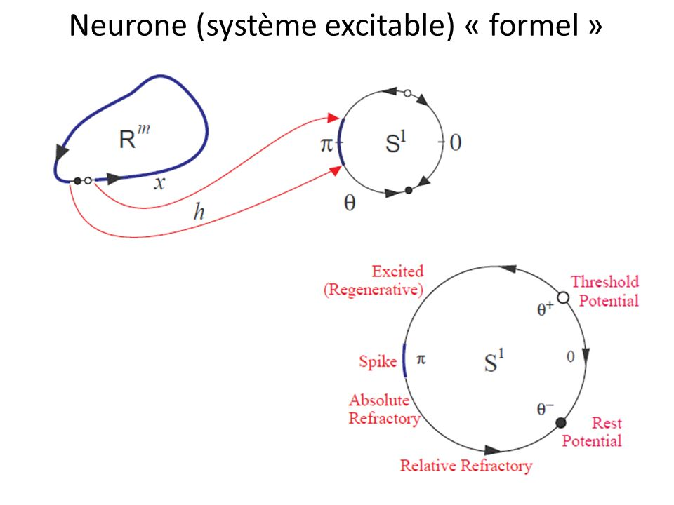 Neurone (système excitable) « formel »