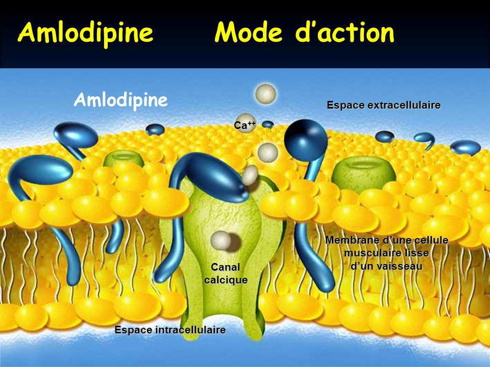 Amlodipine Mode d'action