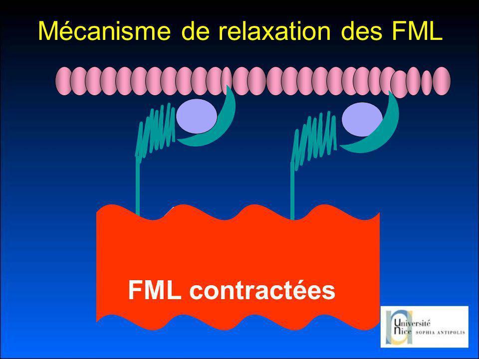 Mécanisme de relaxation des FML