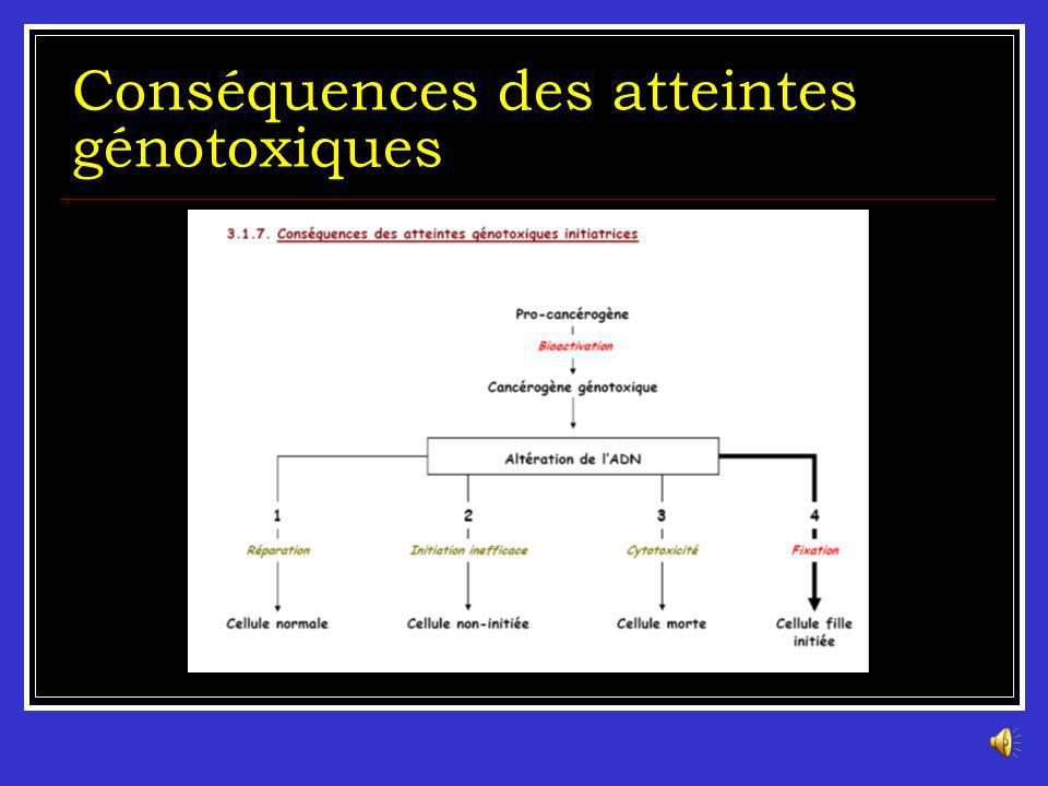 Conséquences des atteintes génotoxiques
