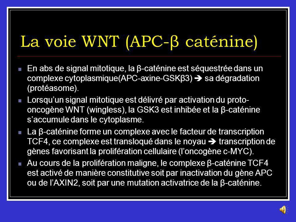 La voie WNT (APC-β caténine)