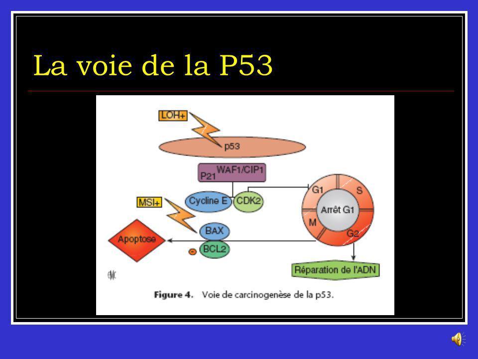 La voie de la P53