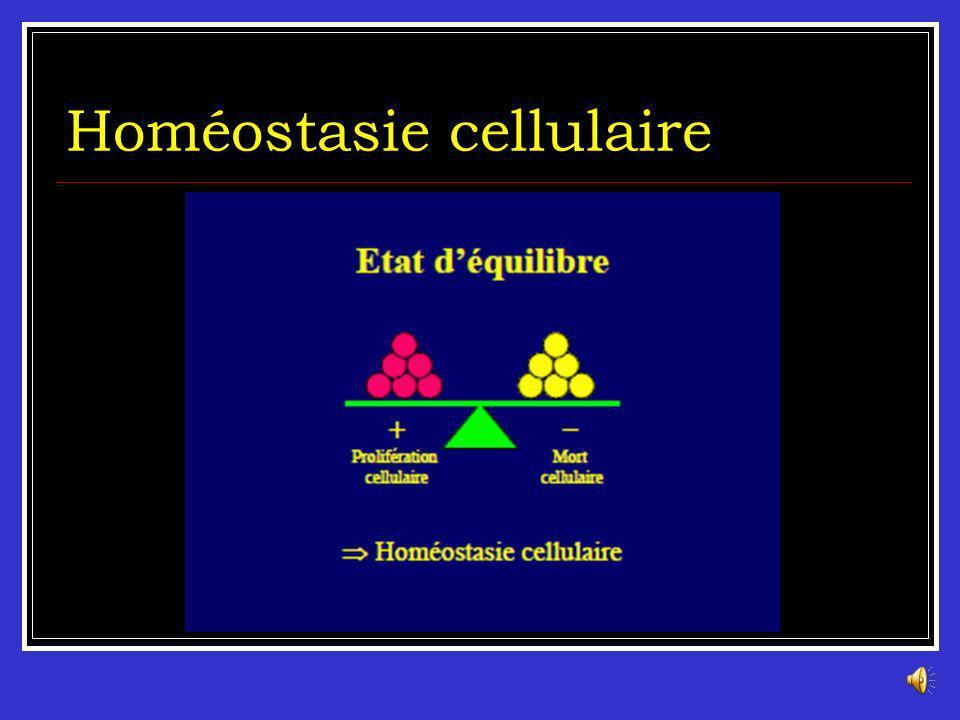 Homéostasie cellulaire