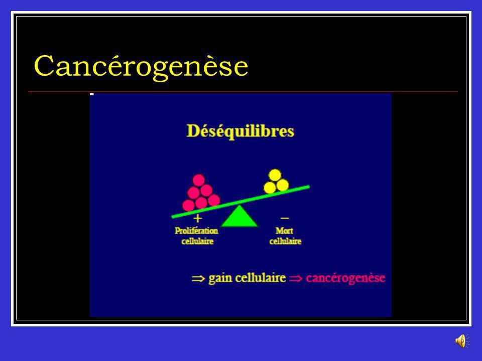 Cancérogenèse