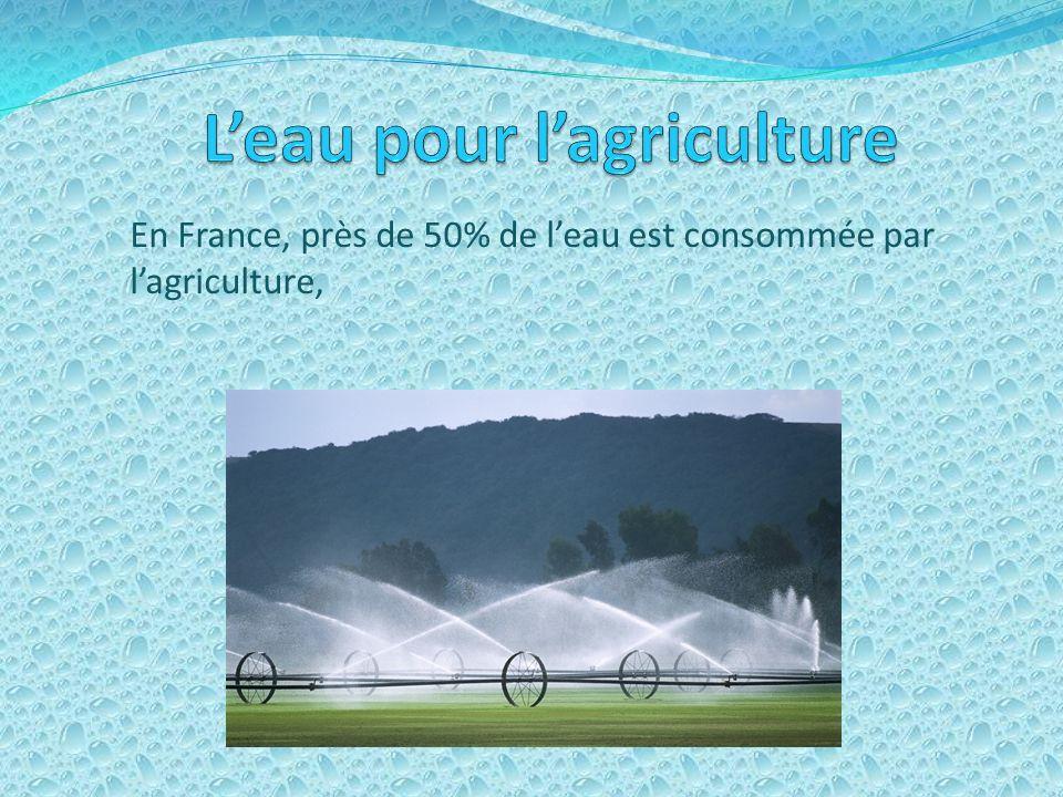 L'eau pour l'agriculture