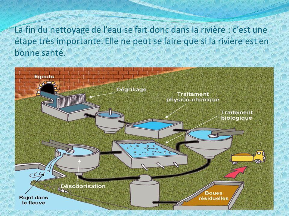 La fin du nettoyage de l'eau se fait donc dans la rivière : c'est une étape très importante.