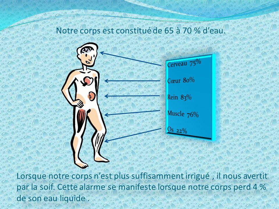 Notre corps est constitué de 65 à 70 % d'eau.
