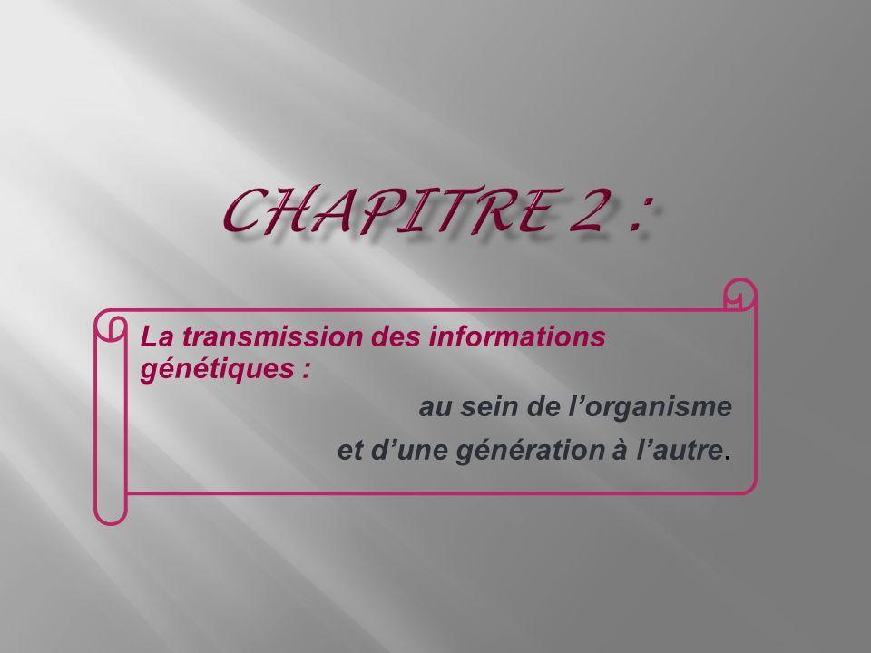 Chapitre 2 : La transmission des informations génétiques :