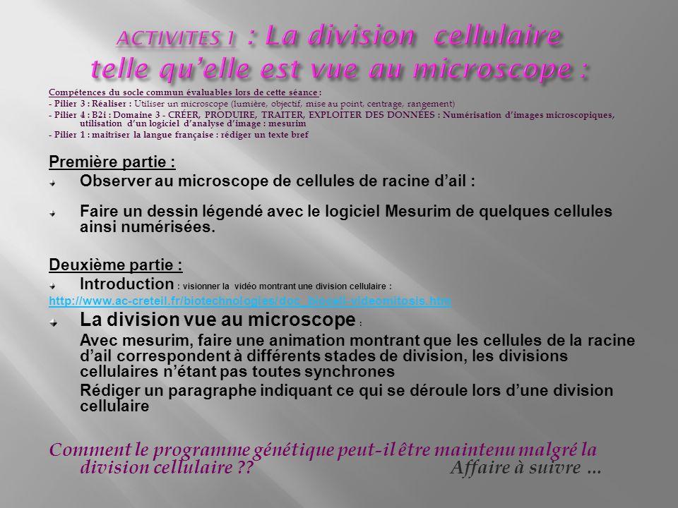 ACTIVITES 1 : La division cellulaire telle qu'elle est vue au microscope :
