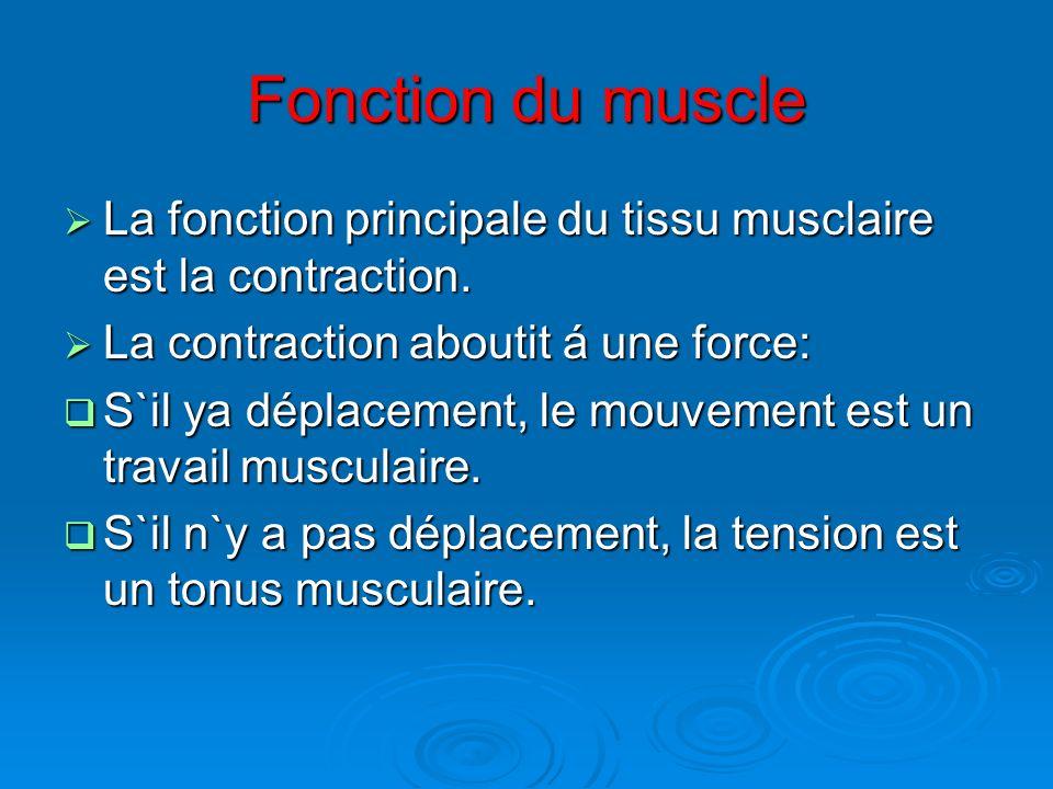 Fonction du muscle La fonction principale du tissu musclaire est la contraction. La contraction aboutit á une force: