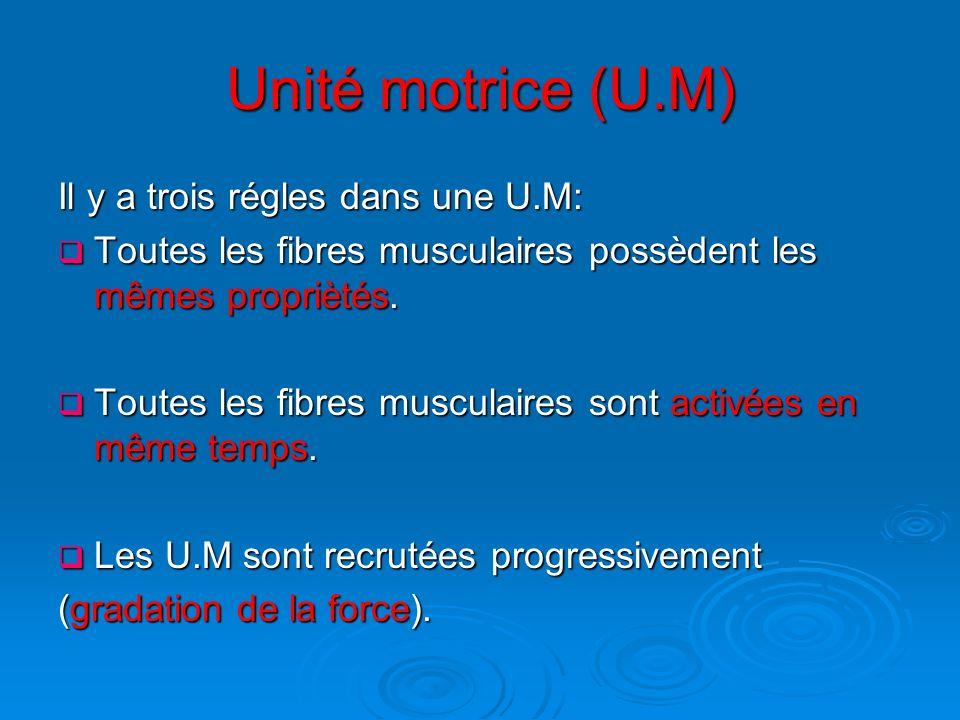 Unité motrice (U.M) Il y a trois régles dans une U.M: