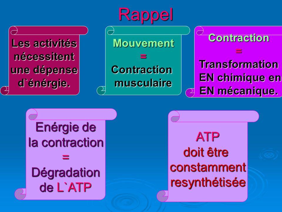 Rappel Enérgie de ATP la contraction doit être = constamment