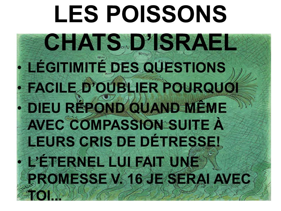 LES POISSONS CHATS D'ISRAEL