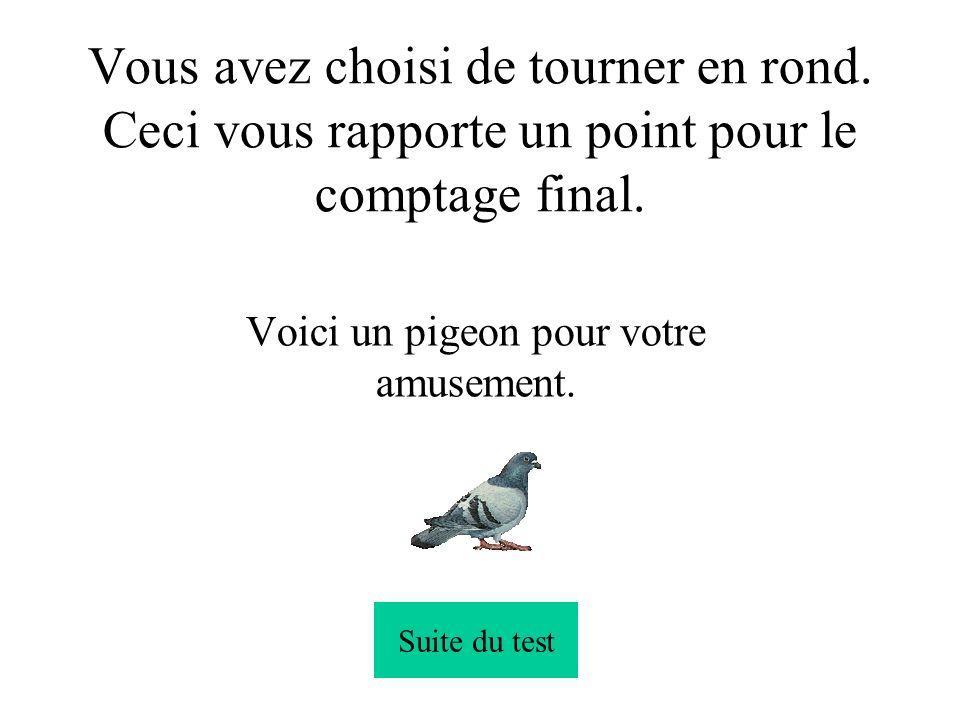 Voici un pigeon pour votre amusement.