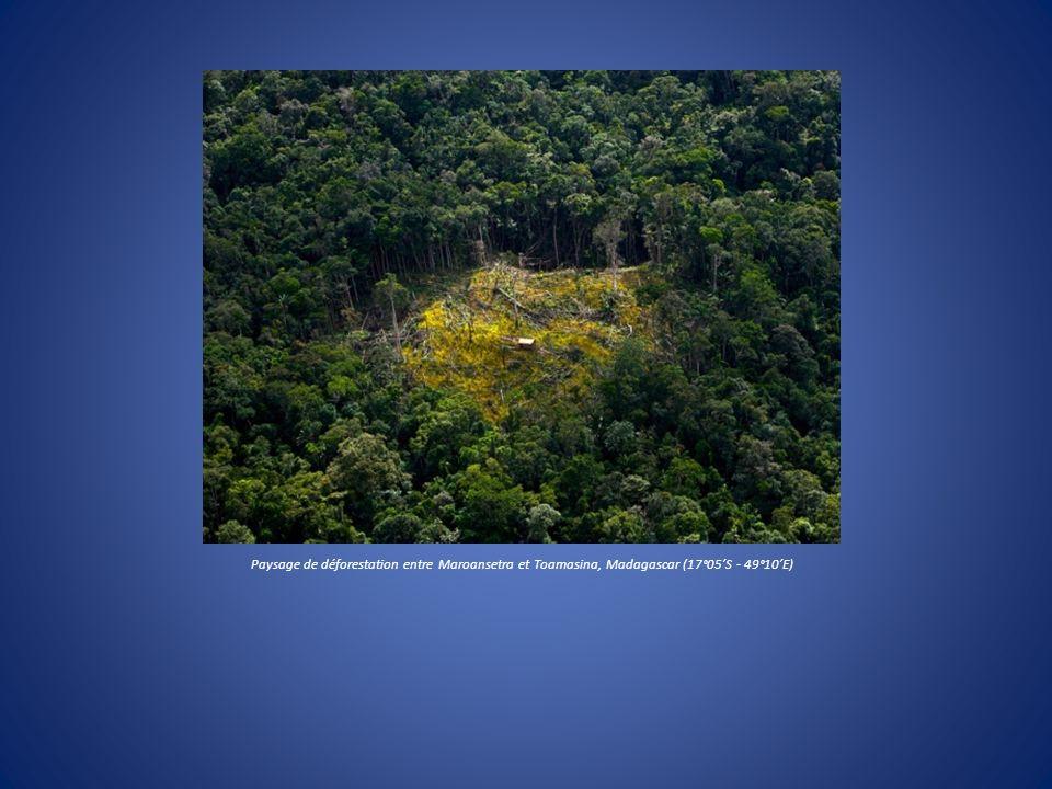 Paysage de déforestation entre Maroansetra et Toamasina, Madagascar (17°05'S - 49°10'E)
