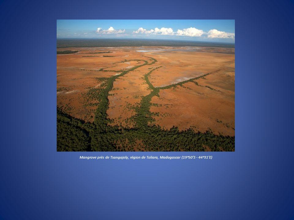 Mangrove près de Tsangajoly, région de Toliara, Madagascar (19°50'S - 44°31'E)
