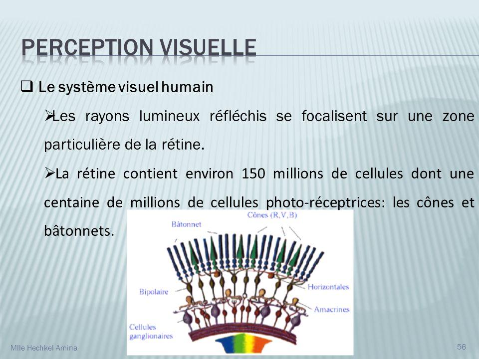 Perception visuelle Le système visuel humain