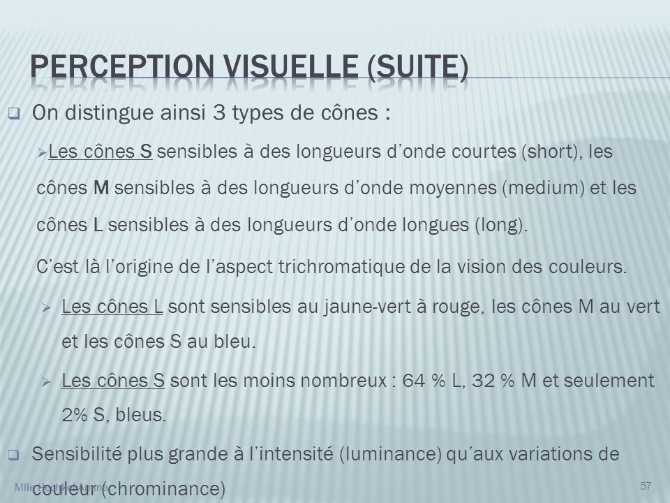 Perception visuelle (suite)