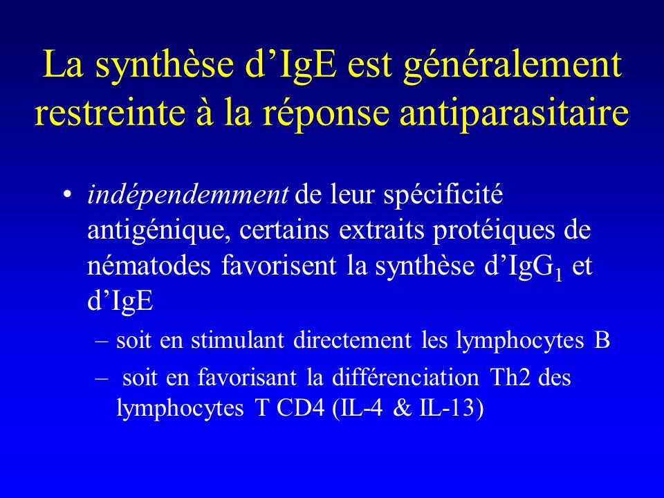 La synthèse d'IgE est généralement restreinte à la réponse antiparasitaire