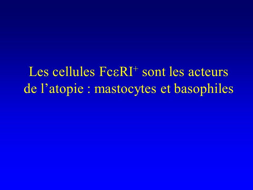 Les cellules FceRI+ sont les acteurs de l'atopie : mastocytes et basophiles