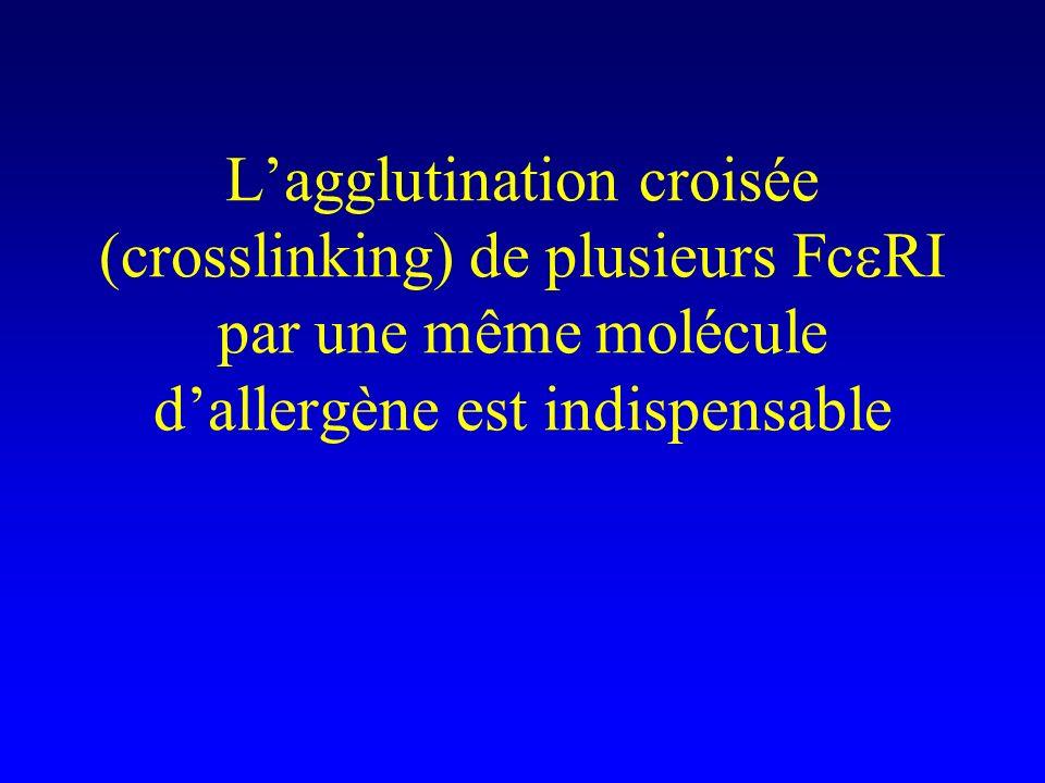 L'agglutination croisée (crosslinking) de plusieurs FceRI par une même molécule d'allergène est indispensable