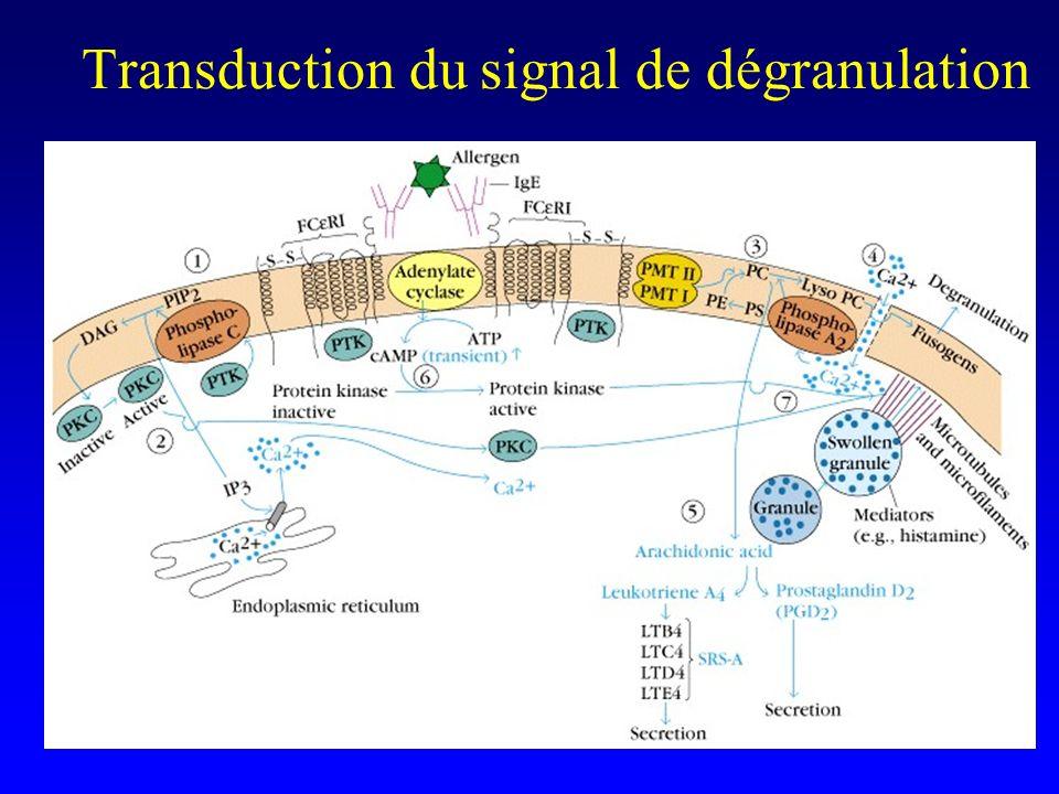Transduction du signal de dégranulation