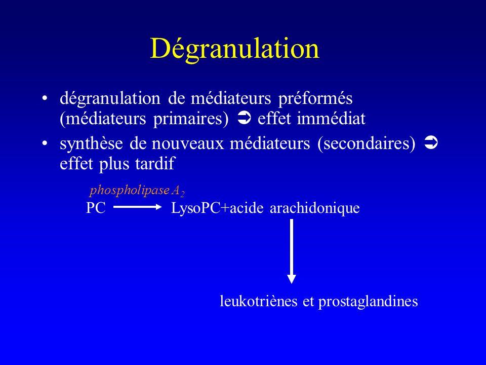Dégranulation dégranulation de médiateurs préformés (médiateurs primaires)  effet immédiat.