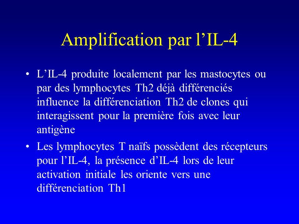 Amplification par l'IL-4