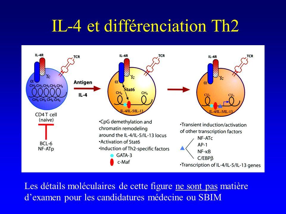 IL-4 et différenciation Th2