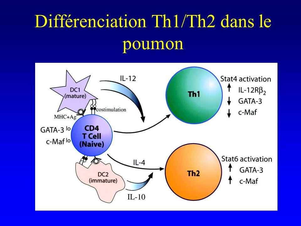 Différenciation Th1/Th2 dans le poumon