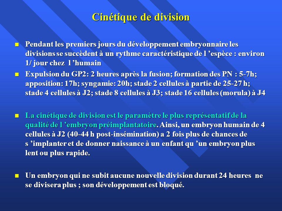 Cinétique de division