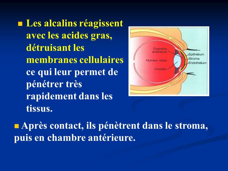 Les alcalins réagissent avec les acides gras, détruisant les membranes cellulaires ce qui leur permet de pénétrer très rapidement dans les tissus.