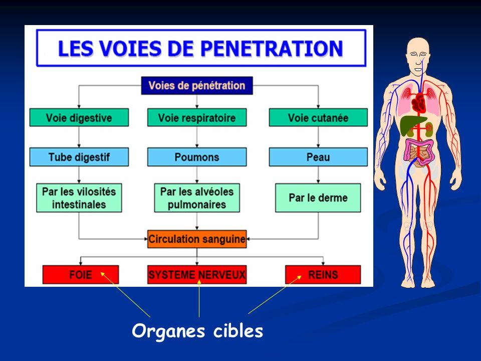Organes cibles