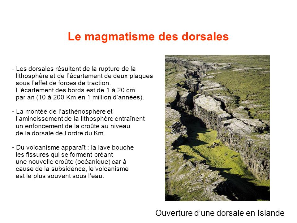 Le magmatisme des dorsales