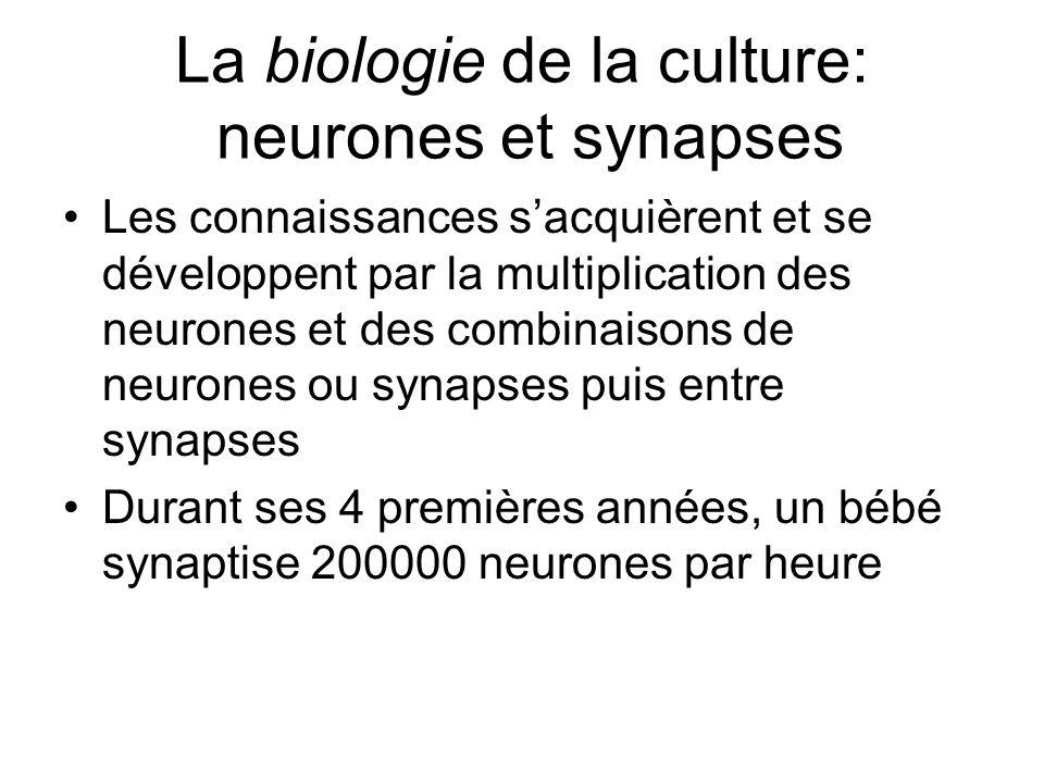 La biologie de la culture: neurones et synapses