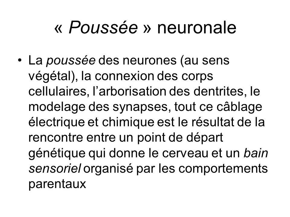« Poussée » neuronale