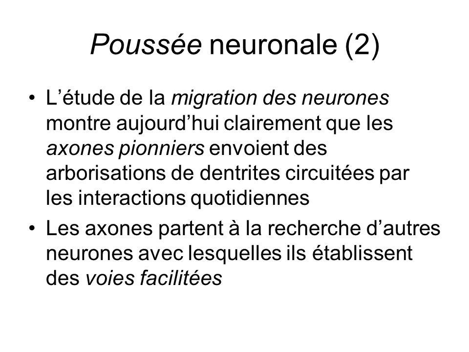 Poussée neuronale (2)