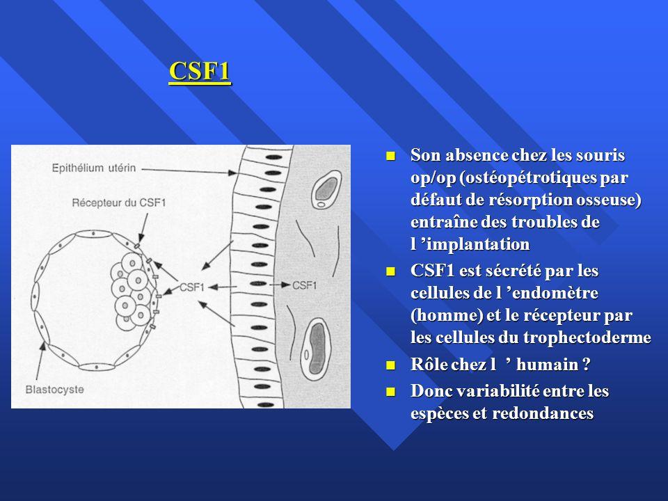 CSF1 Son absence chez les souris op/op (ostéopétrotiques par défaut de résorption osseuse) entraîne des troubles de l 'implantation.