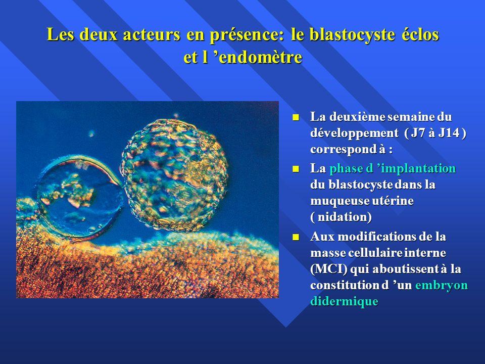 Les deux acteurs en présence: le blastocyste éclos et l 'endomètre