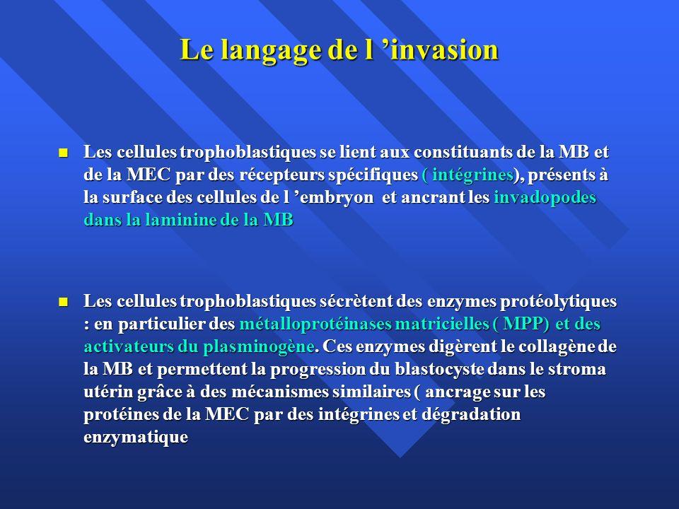 Le langage de l 'invasion