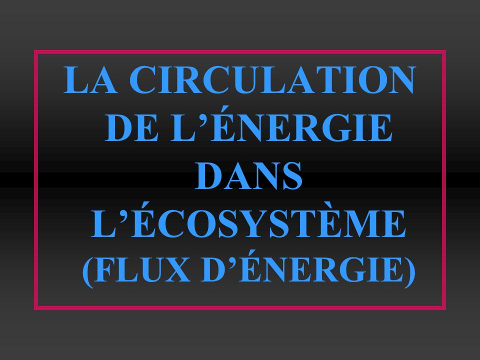 LA CIRCULATION DE L'ÉNERGIE DANS L'ÉCOSYSTÈME (FLUX D'ÉNERGIE)