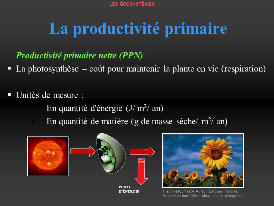 La productivité primaire