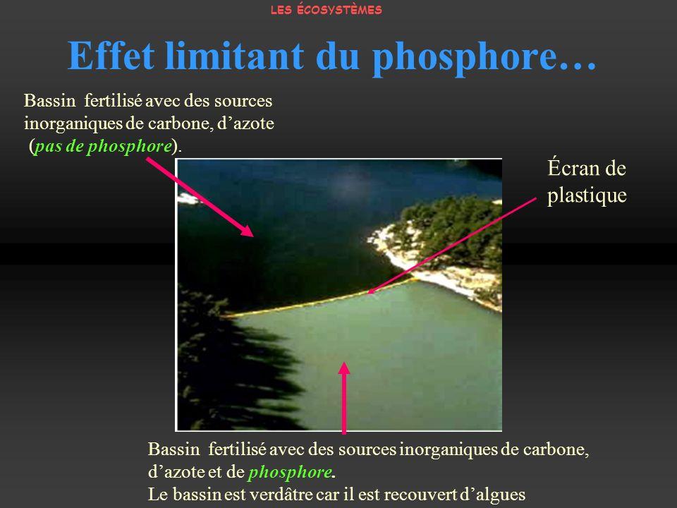 Effet limitant du phosphore…