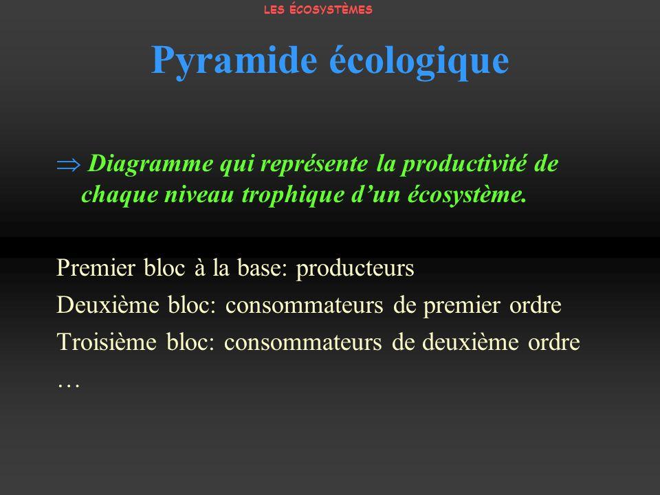 LES ÉCOSYSTÈMES Pyramide écologique.  Diagramme qui représente la productivité de chaque niveau trophique d'un écosystème.