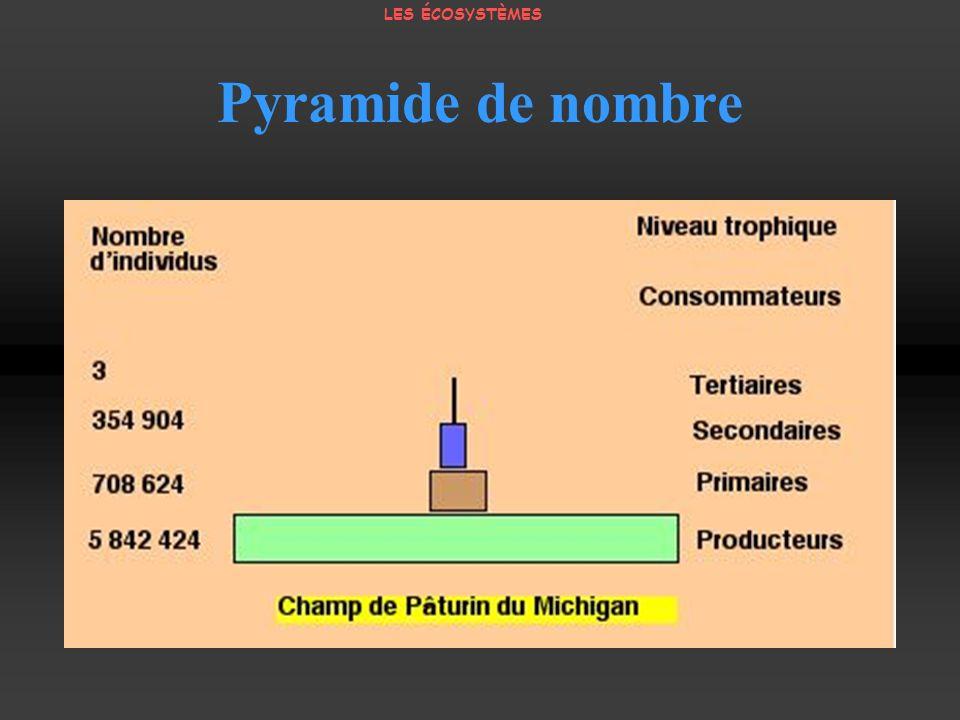 LES ÉCOSYSTÈMES Pyramide de nombre