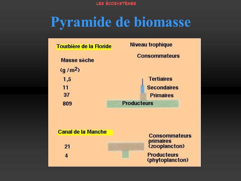 LES ÉCOSYSTÈMES Pyramide de biomasse