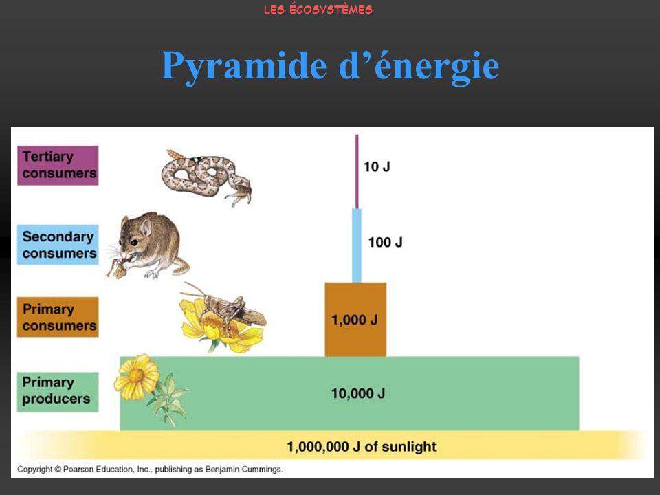 LES ÉCOSYSTÈMES Pyramide d'énergie